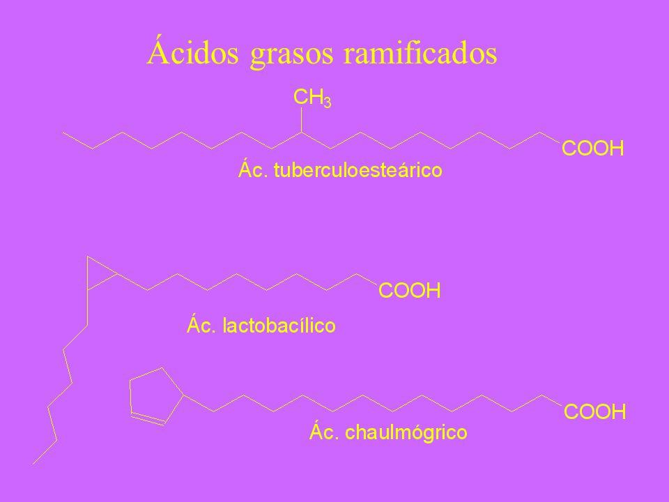 Ácidos grasos ramificados
