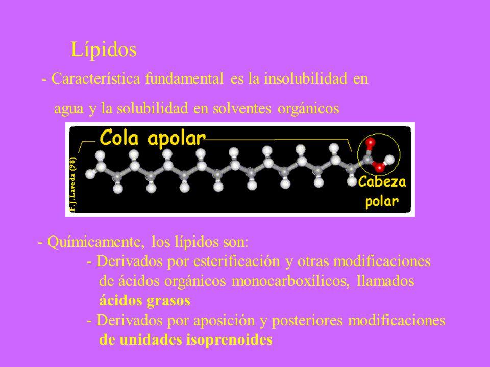 Lípidos - Característica fundamental es la insolubilidad en
