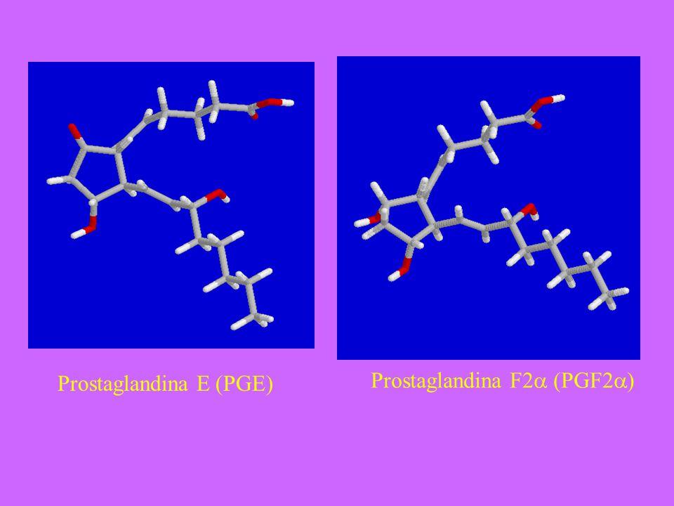 Prostaglandina E (PGE)