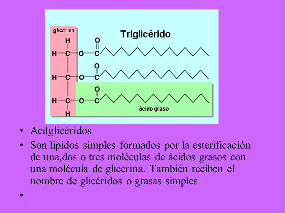 Acilglicéridos