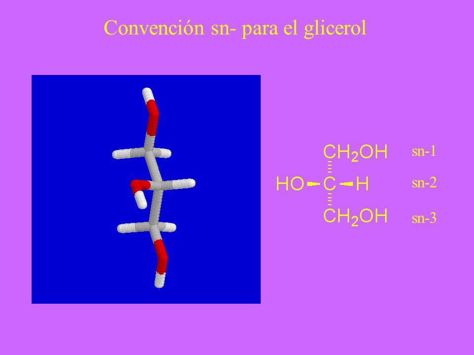 Convención sn- para el glicerol