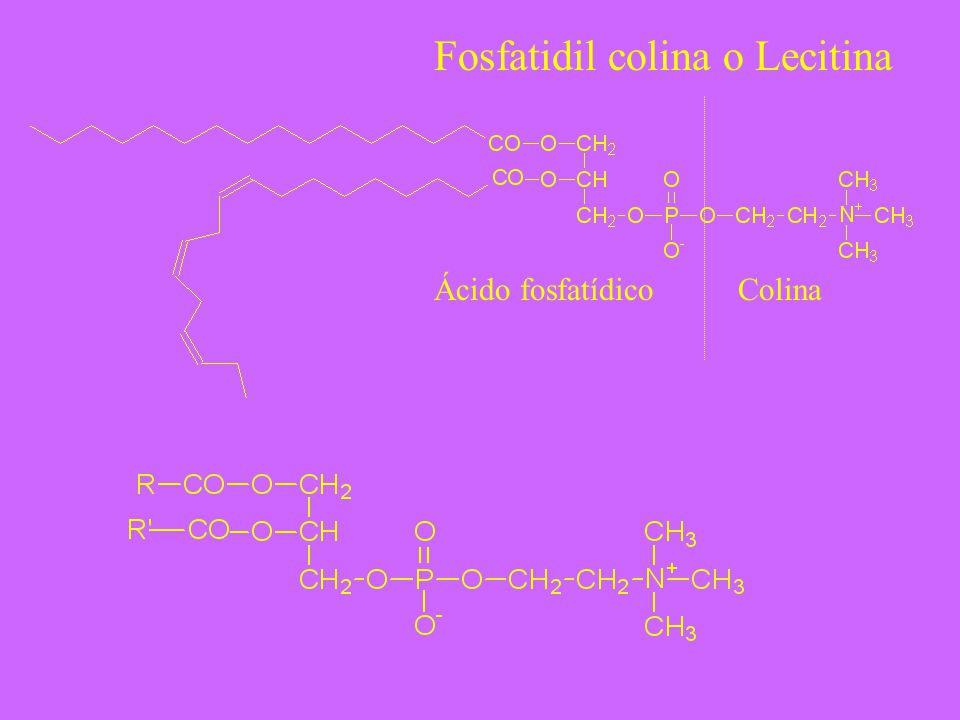 Fosfatidil colina o Lecitina