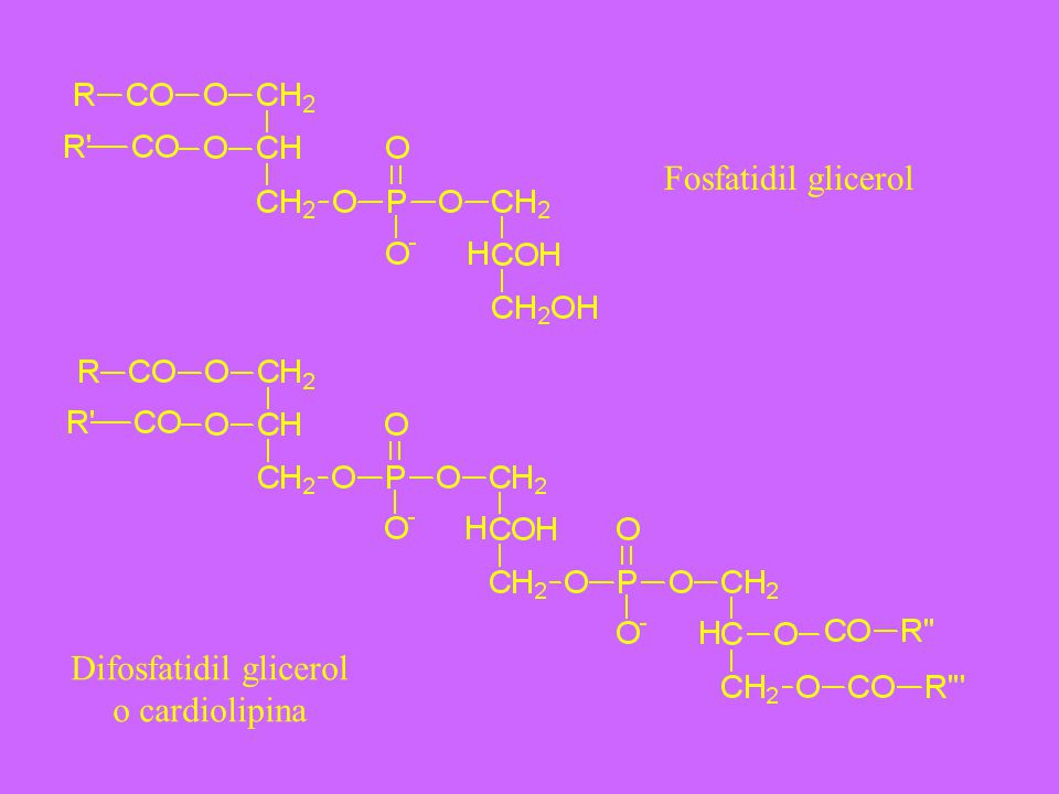Difosfatidil glicerol