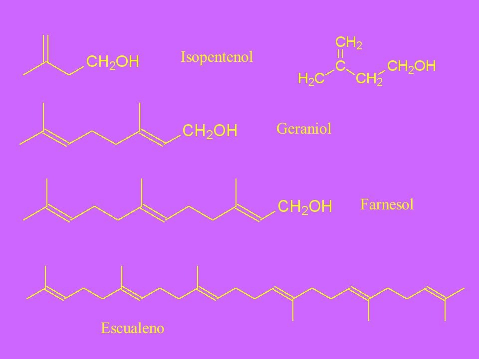 Isopentenol Geraniol Farnesol Escualeno