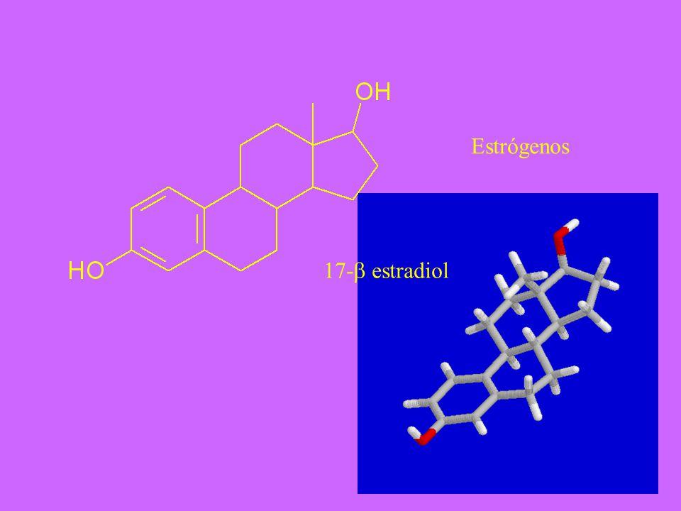 Estrógenos 17-b estradiol
