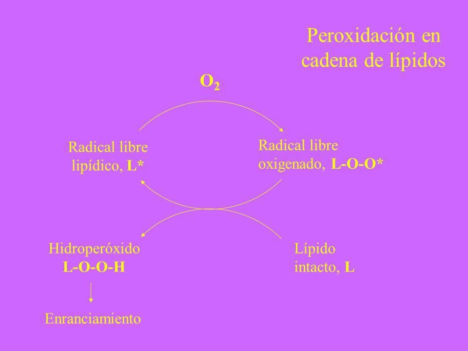 Peroxidación en cadena de lípidos O2 Radical libre lipídico, L*