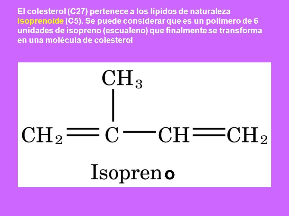 El colesterol (C27) pertenece a los lípidos de naturaleza isoprenoide (C5). Se puede considerar que es un polímero de 6 unidades de isopreno (escualeno) que finalmente se transforma en una molécula de colesterol
