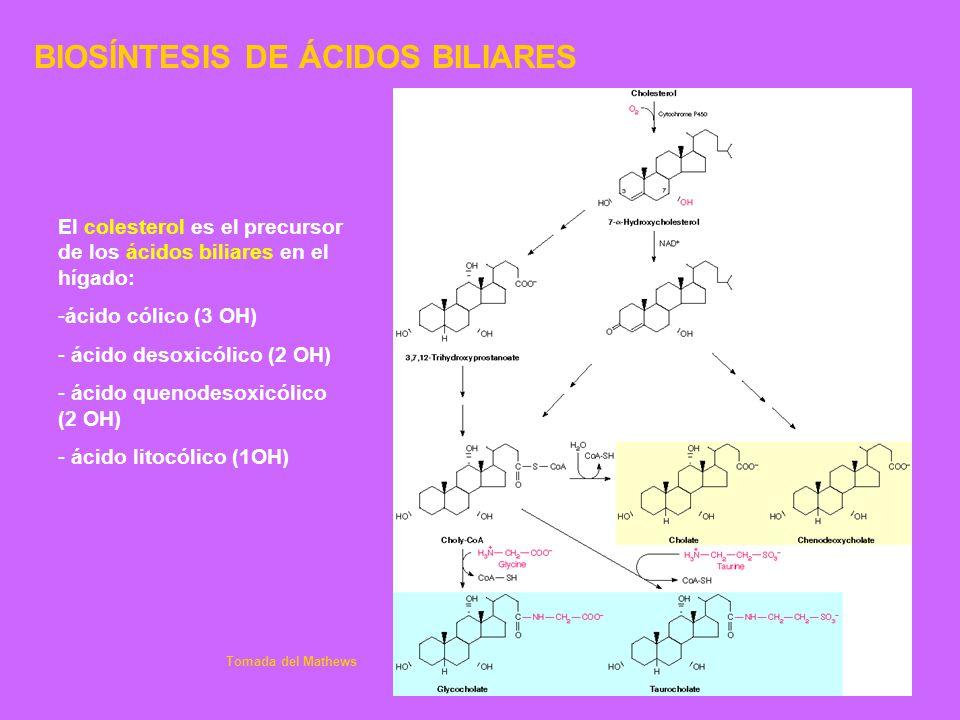 BIOSÍNTESIS DE ÁCIDOS BILIARES