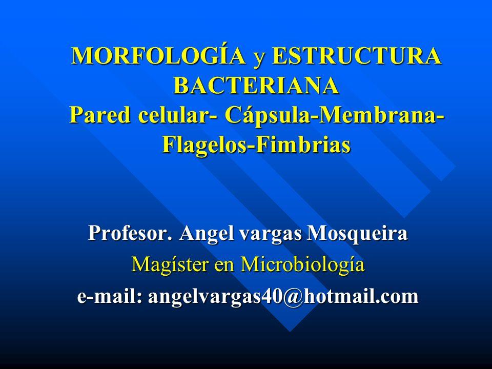 Profesor. Angel vargas Mosqueira