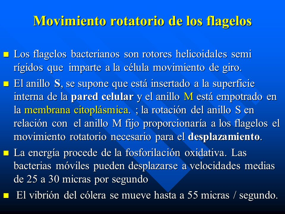 Movimiento rotatorio de los flagelos