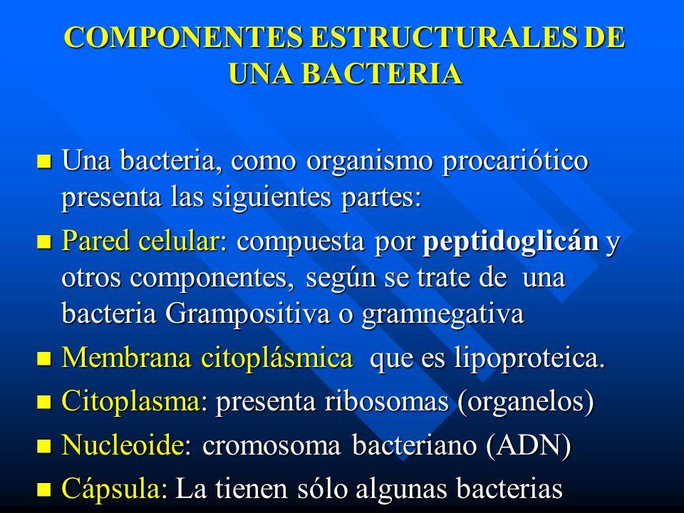 COMPONENTES ESTRUCTURALES DE UNA BACTERIA