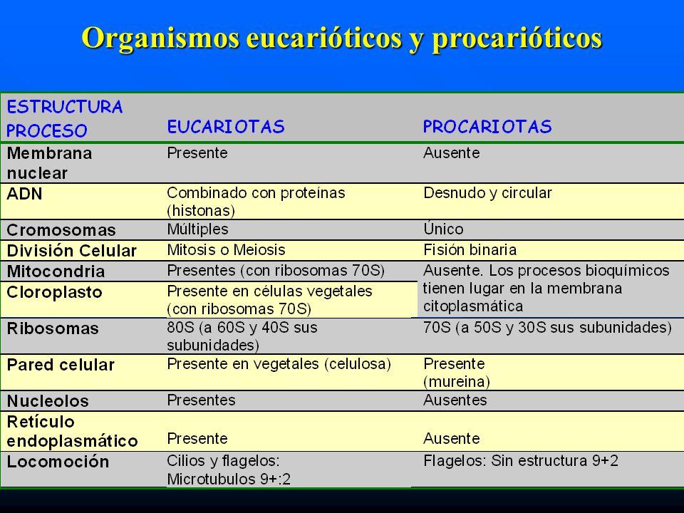 Organismos eucarióticos y procarióticos