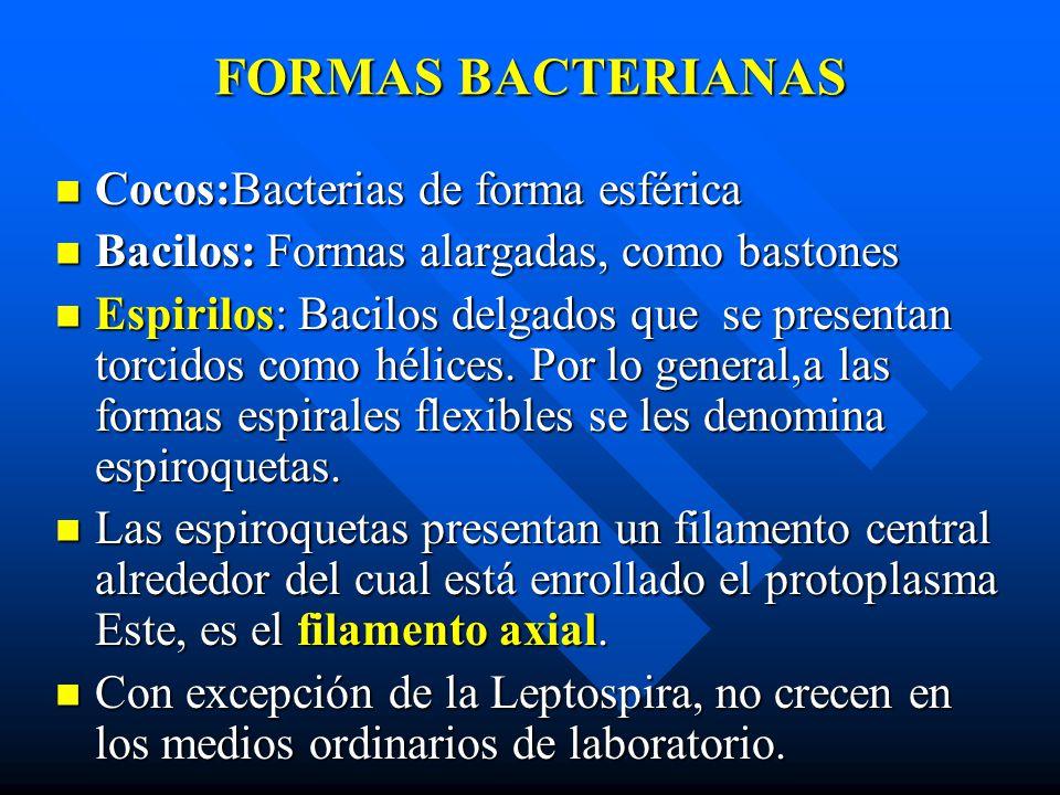 FORMAS BACTERIANAS Cocos:Bacterias de forma esférica