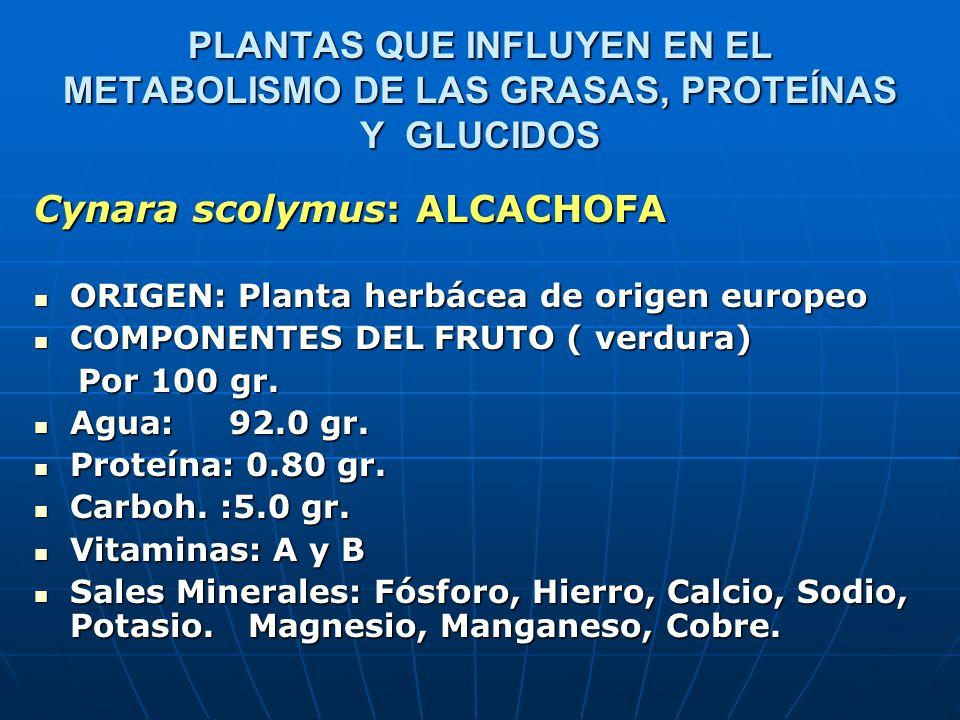 Cynara scolymus: ALCACHOFA