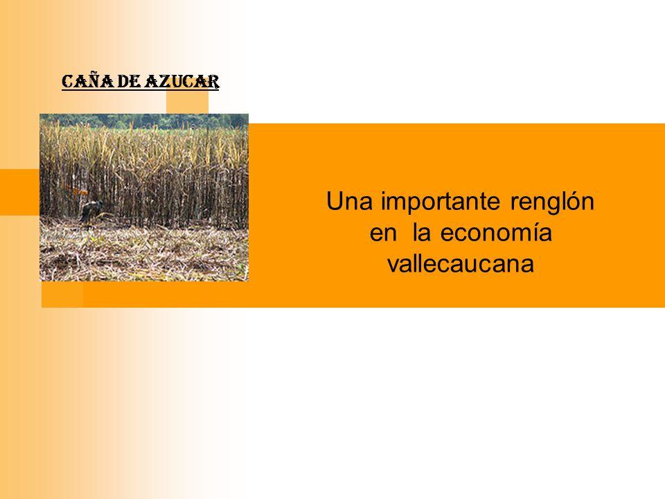 Una importante renglón en la economía vallecaucana