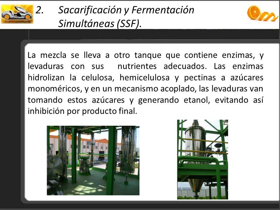 Sacarificación y Fermentación Simultáneas (SSF).