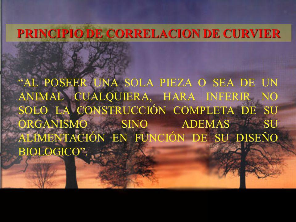 PRINCIPIO DE CORRELACION DE CURVIER