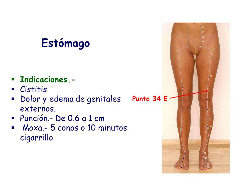 Estómago Indicaciones.- Cistitis Dolor y edema de genitales externos.