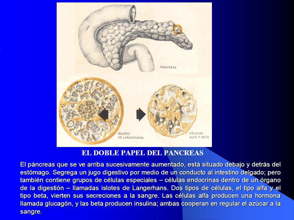 EL DOBLE PAPEL DEL PANCREAS