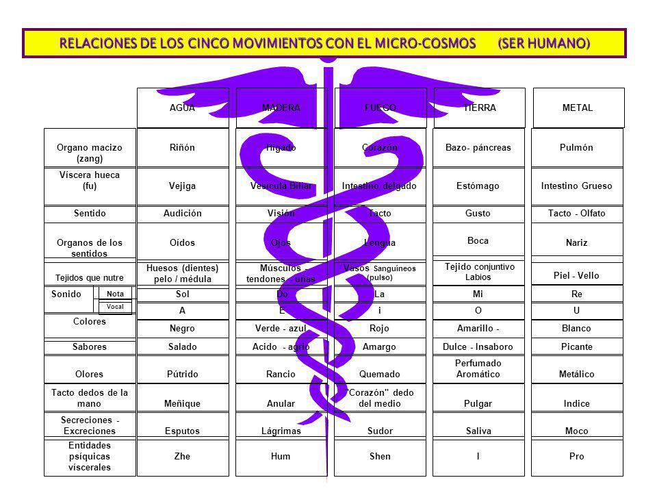 RELACIONES DE LOS CINCO MOVIMIENTOS CON EL MICRO-COSMOS (SER HUMANO)