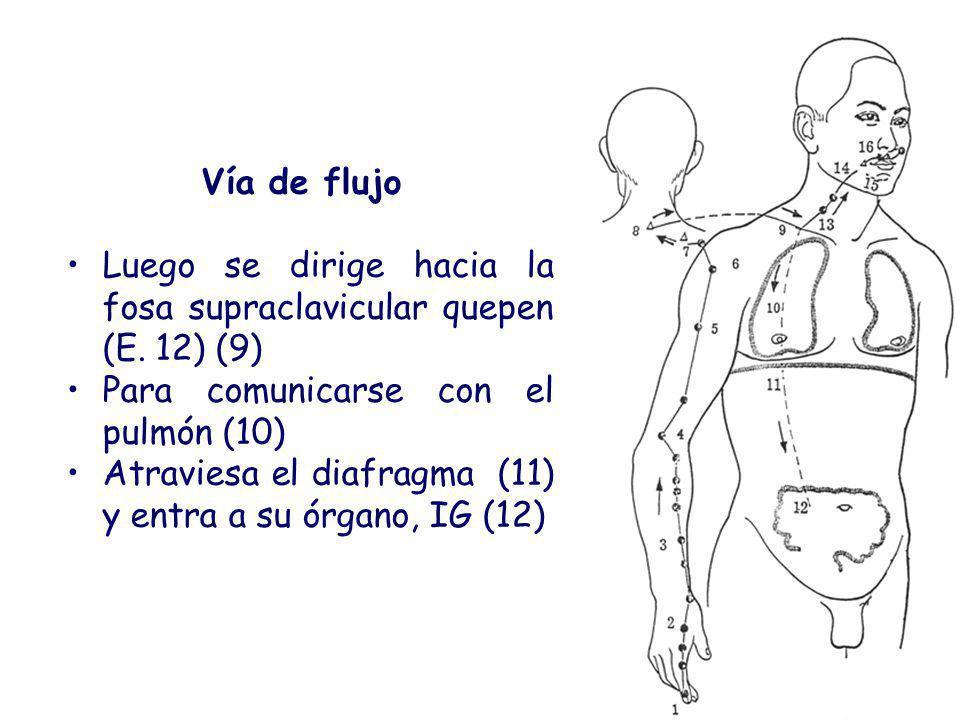 Vía de flujo Luego se dirige hacia la fosa supraclavicular quepen (E. 12) (9) Para comunicarse con el pulmón (10)