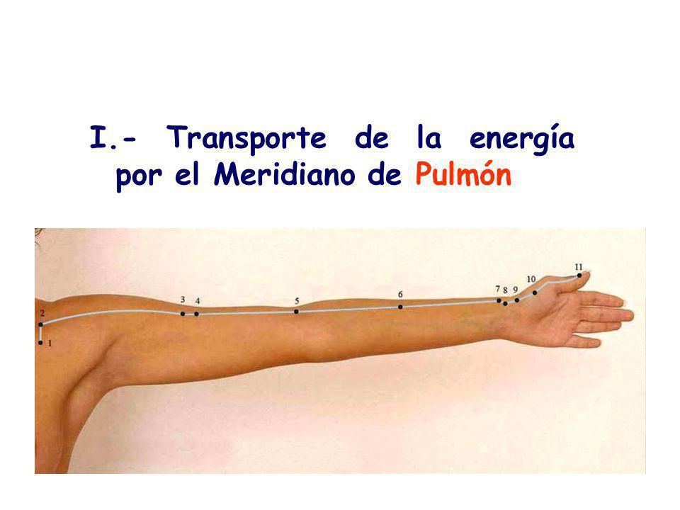 I.- Transporte de la energía por el Meridiano de Pulmón