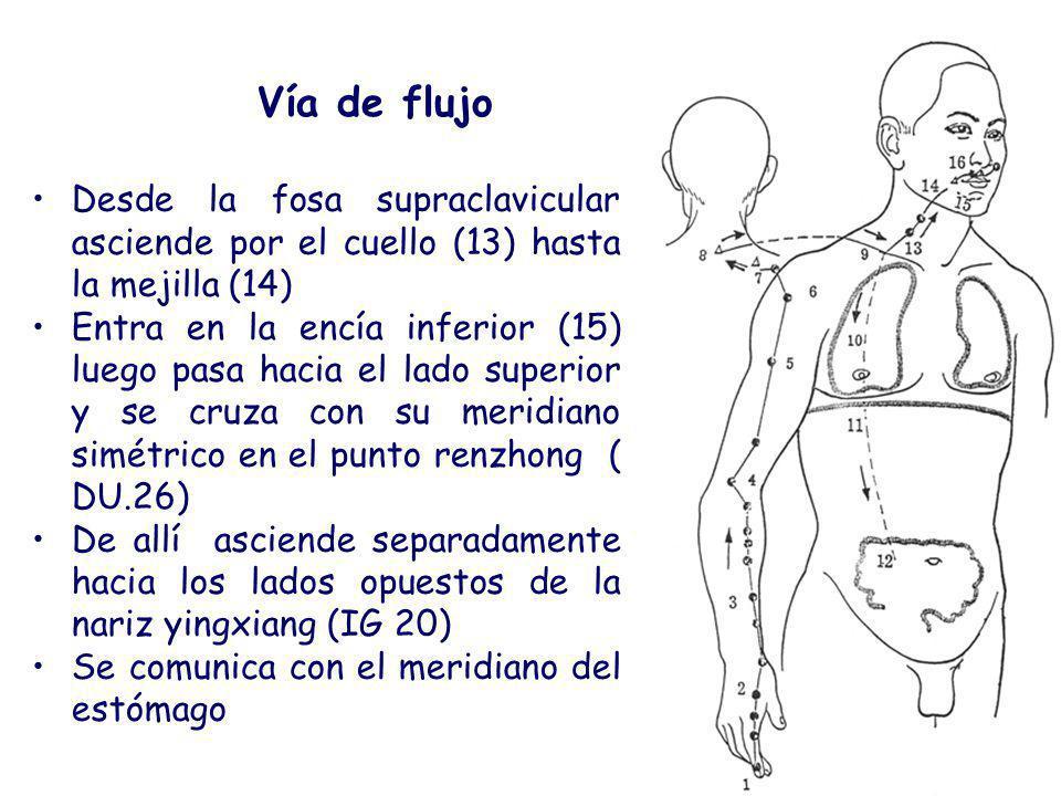 Vía de flujo Desde la fosa supraclavicular asciende por el cuello (13) hasta la mejilla (14)