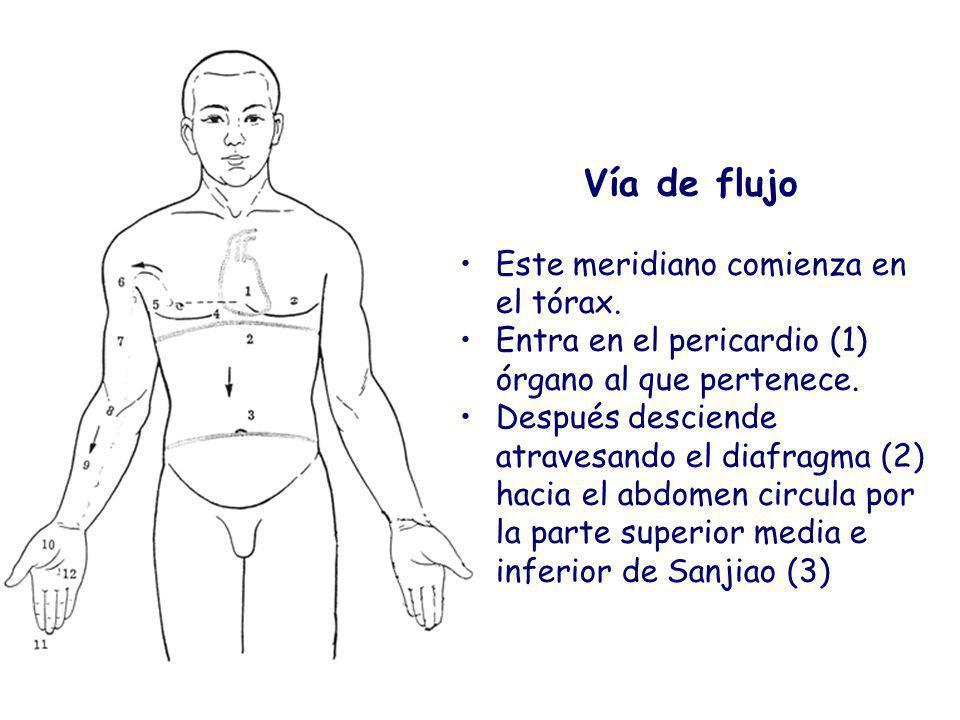 Vía de flujo Este meridiano comienza en el tórax. Entra en el pericardio (1) órgano al que pertenece.