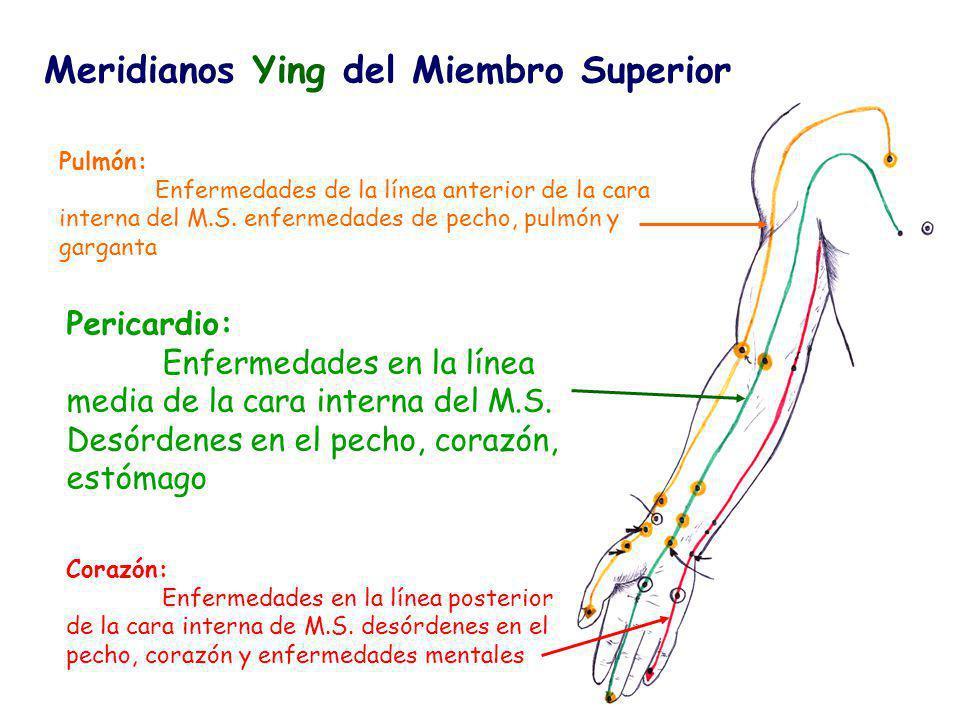 Meridianos Ying del Miembro Superior