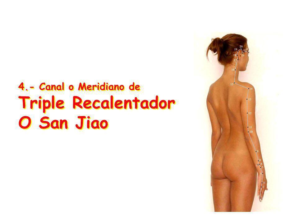 4.- Canal o Meridiano de Triple Recalentador O San Jiao
