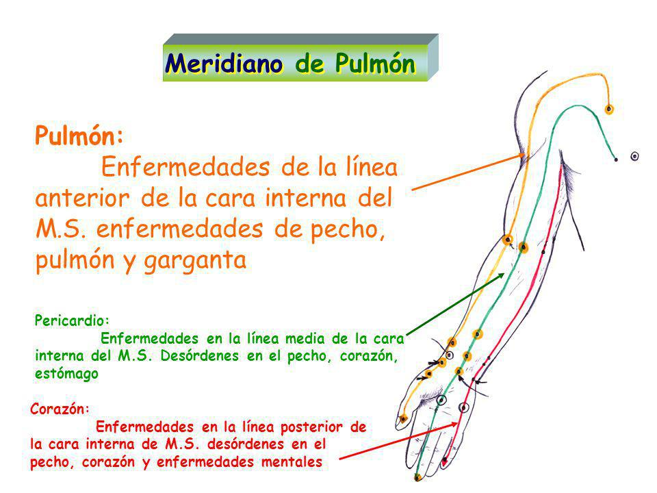 Meridiano de Pulmón Pulmón: