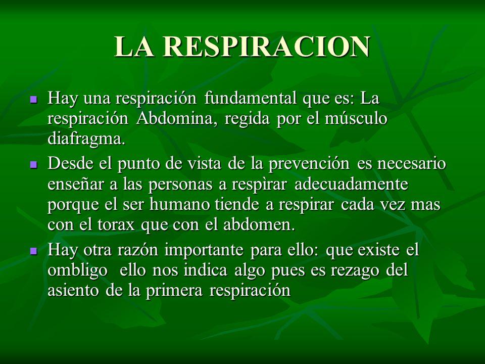 LA RESPIRACION Hay una respiración fundamental que es: La respiración Abdomina, regida por el músculo diafragma.