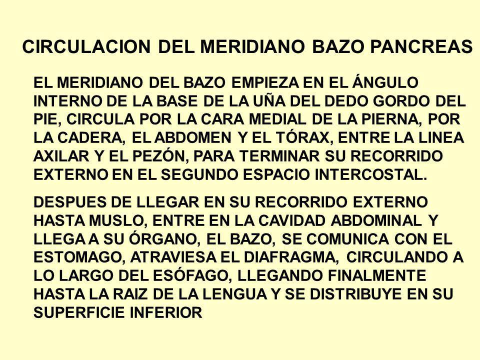 CIRCULACION DEL MERIDIANO BAZO PANCREAS