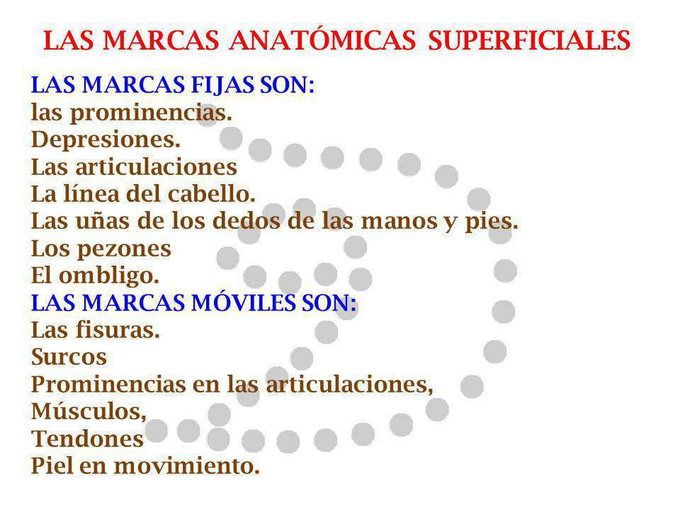 LAS MARCAS ANATÓMICAS SUPERFICIALES