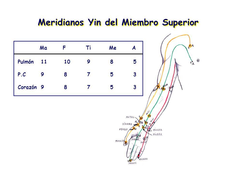 Meridianos Yin del Miembro Superior
