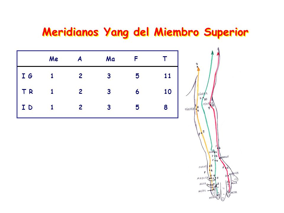 Meridianos Yang del Miembro Superior