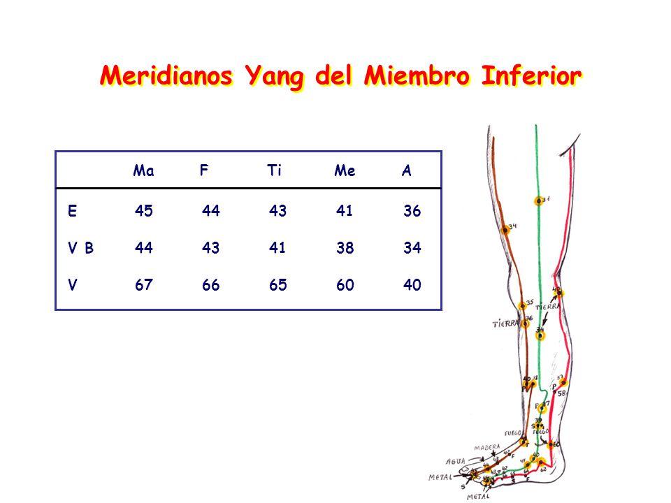 Meridianos Yang del Miembro Inferior