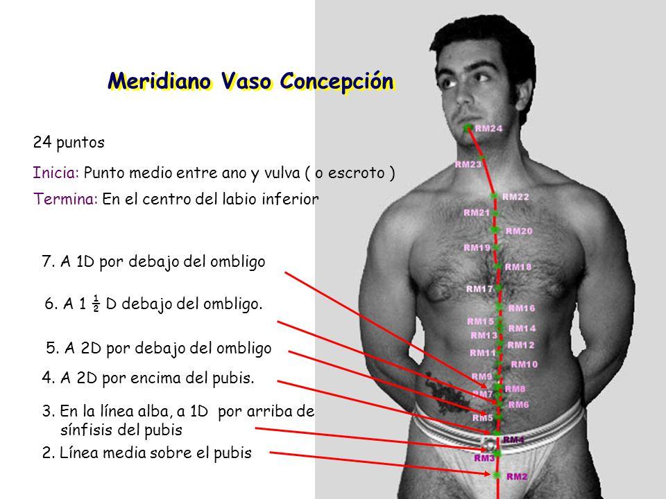 Meridiano Vaso Concepción