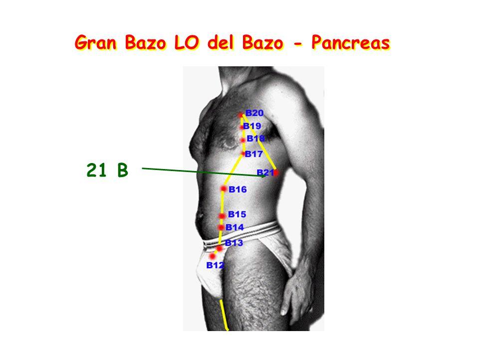 Gran Bazo LO del Bazo - Pancreas