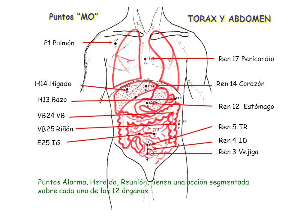 Puntos MO TORAX Y ABDOMEN