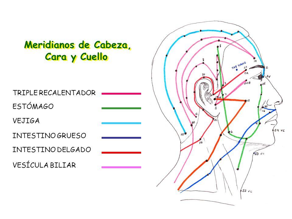 Meridianos de Cabeza, Cara y Cuello TRIPLE RECALENTADOR ESTÓMAGO