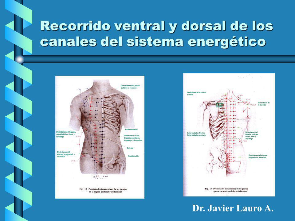 Recorrido ventral y dorsal de los canales del sistema energético