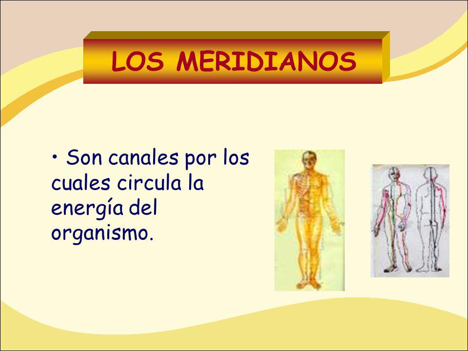 LOS MERIDIANOS Son canales por los cuales circula la energía del organismo.