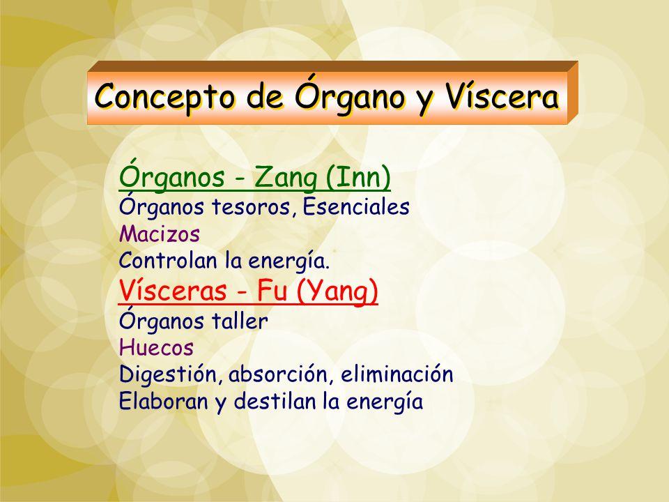 Concepto de Órgano y Víscera