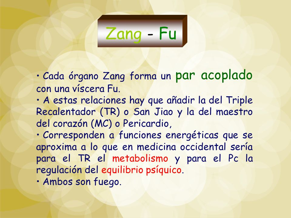 Zang - Fu Cada órgano Zang forma un par acoplado con una víscera Fu.