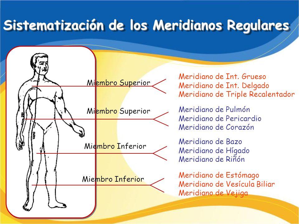 Sistematización de los Meridianos Regulares