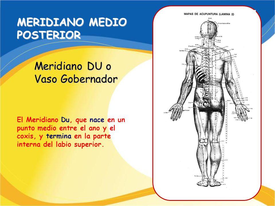 MERIDIANO MEDIO POSTERIOR