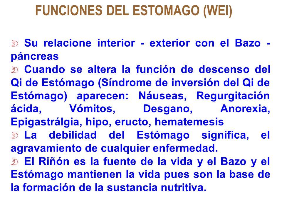 FUNCIONES DEL ESTOMAGO (WEI)