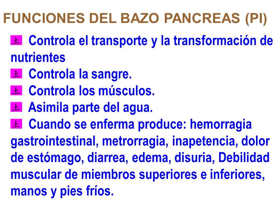 FUNCIONES DEL BAZO PANCREAS (PI)