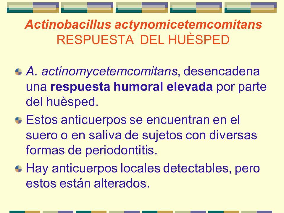 Actinobacillus actynomicetemcomitans RESPUESTA DEL HUÈSPED